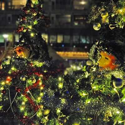 Zingende Kerstbomen